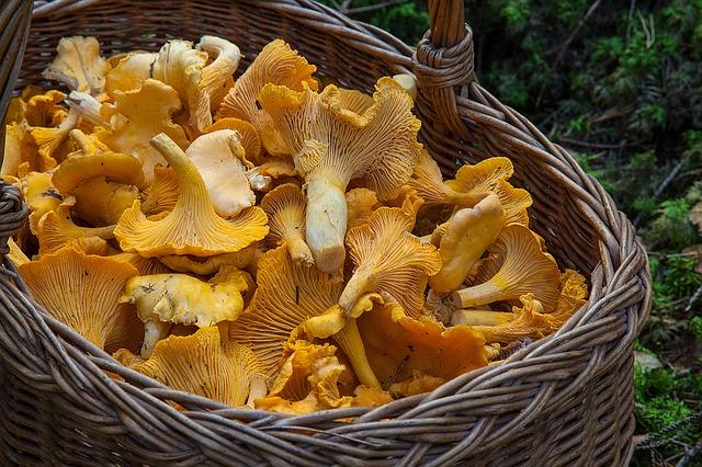 fungus-1194380_640
