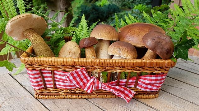 mushrooms-2678385_640